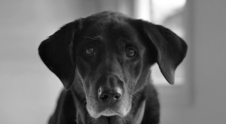Perder um animal doméstico é uma dor enorme e deve ser respeitada: quem nunca viveu essa experiência não pode entendê-la