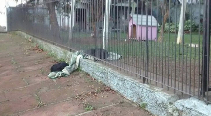 The photo of these two dogs that share a blanket is the most touching thing you'll see today