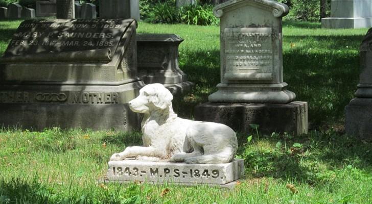 En New York, los animales domesticos podran ser sepultados cerca a los propietarios en los cementerios
