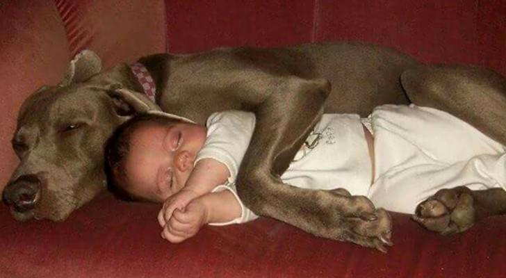Maravilhosas fotos de crianças que tiveram a sorte de crescer com um animal doméstico