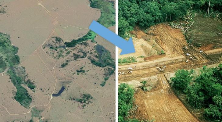 L'Amazonie, en 2018, enregistre une déforestation record : des milliards d'arbres abattus en 7 mois