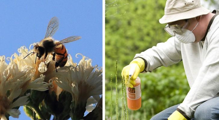 Neue Studie bestätigt, dass Glyphosat zum Aussterben von Bienen beiträgt