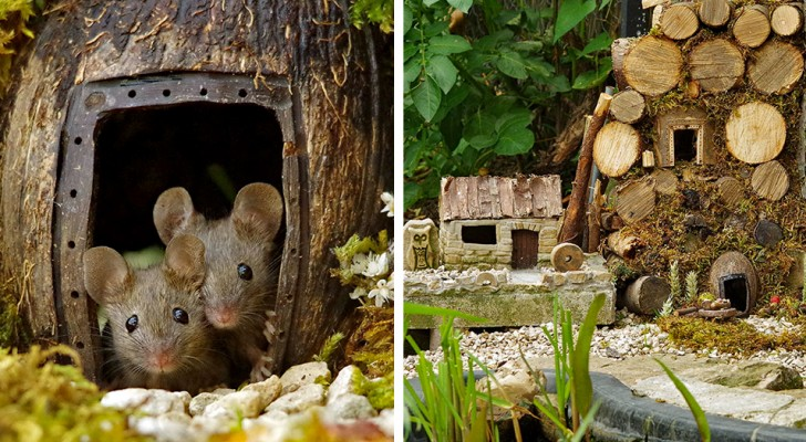 A photographer discovers some mice living in his garden and builds them a fantastic miniature village
