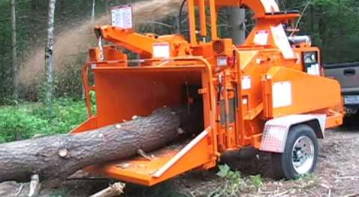 L'impressionnante machine qui pulvérise les arbres en quelques secondes