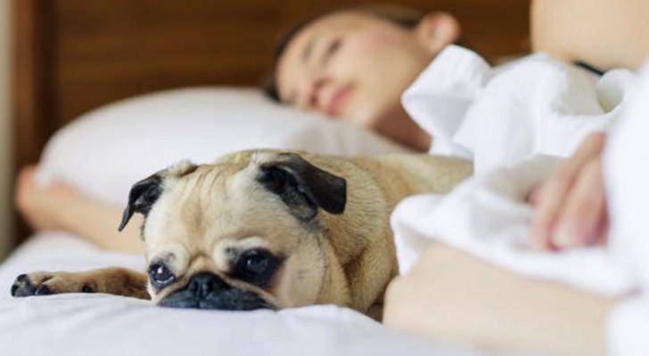 Le donne dormono meglio con il proprio cane che con un'altra persona: lo afferma una curiosa ricerca