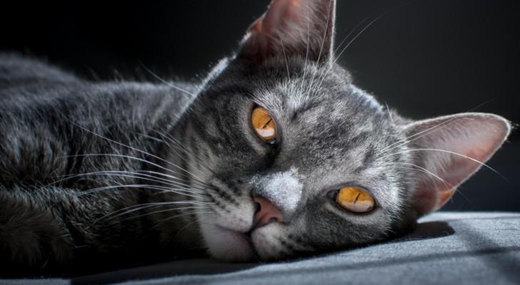 La magia de los gatos: una energia que envuelve y protege tambien a sus patrones
