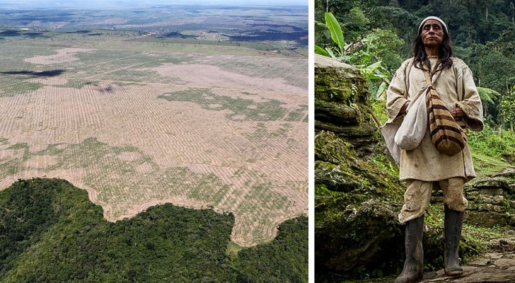 Les indigènes d'Amazonie créeront et protégeront le plus grand espace vert du monde