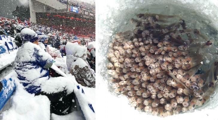 26 images montrant comment l'hiver peut être à la fois spectaculaire et terrible