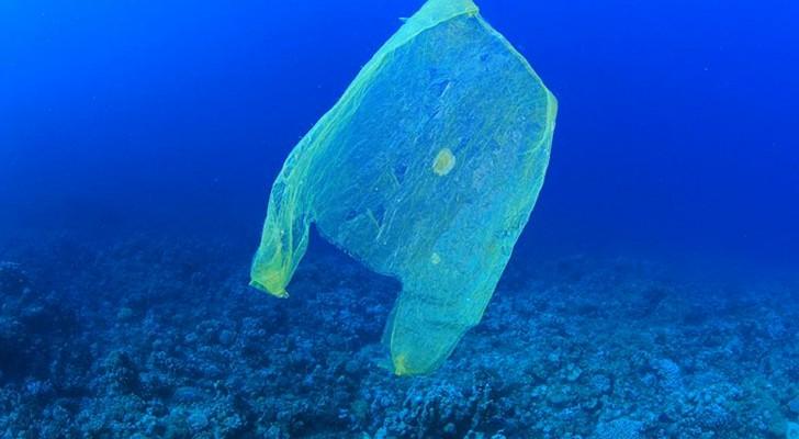 L'Australie a réduit l'utilisation des sacs en plastique de 80% en seulement 3 mois, et ce n'est pas le mérite du gouvernement