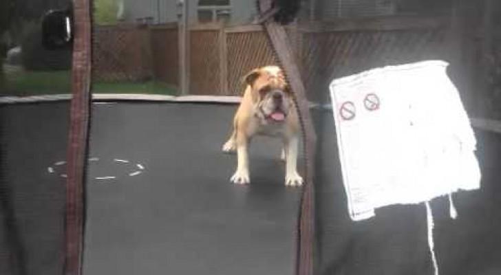 Tiere und Kinder haben einiges gemeinsam, wie diese Bulldogge zeigt