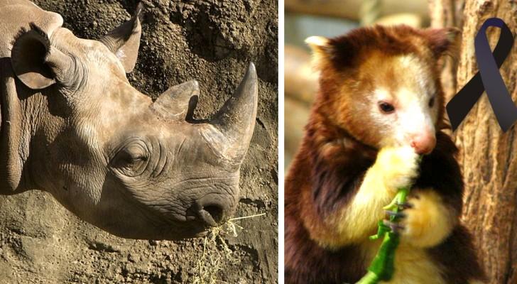 Al deze dieren zijn tussen nu en 2000 uitgestorven en dit is niet voorkomen