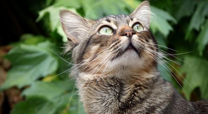 La scienza conferma: cani e gatti possono vedere frequenze a noi invisibili