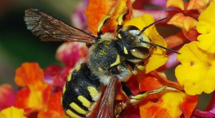 Frankreich ist das erste Land, das die fünf Pestizide verbietet, die für das Verschwinden von Bienen verantwortlich sind