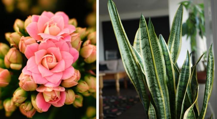 Deze 10 kamerplanten dragen bij aan een ideaal microklimaat