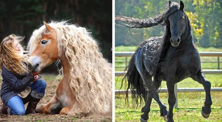 12 Pferderassen, von denen man den Blick nicht wenden kann