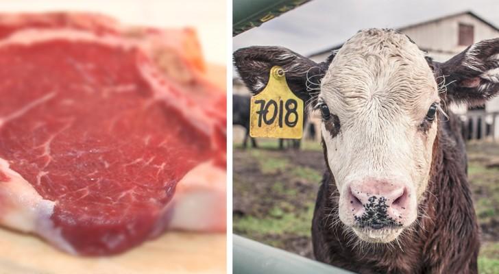 Weniger Fleisch zu essen ist das Beste, was Sie tun können, um den Planeten 2019 zu retten
