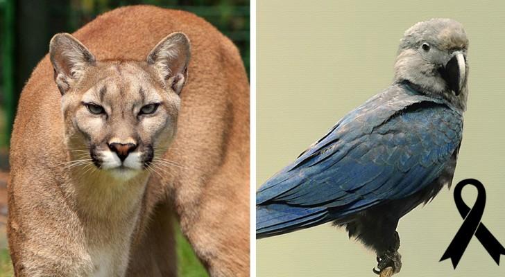 Ecco le specie animali che si sono estinte in natura durante il 2018
