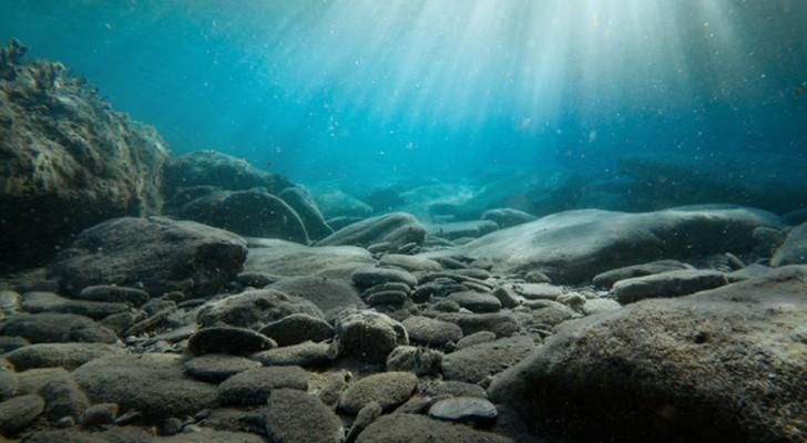 Zoutwatervissen zouden mogelijk al kunnen uitsterven in 2048 zegt een groep van experts