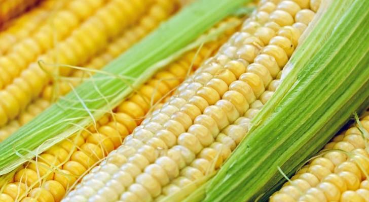 A sorpresa, una rassegna di 6.000 studi mostra che l'uso di cibi OGM porta benefici alla salute