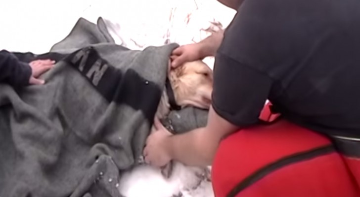 The emotional dog rescue from the icy river