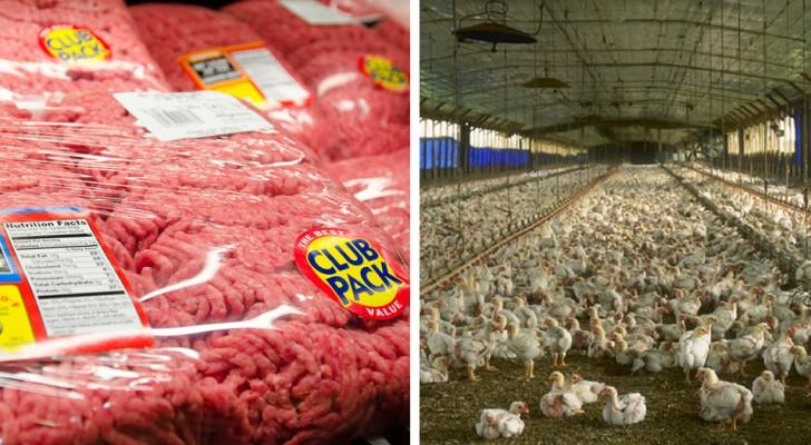 Antibiotiques et pesticides dans les canaux de drainage des élevages intensifs : la viande bon marché empoisonne les eaux européennes
