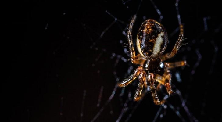 Si les araignées se liaient entre elles, elles pourraient manger toute la race humaine en moins d'un an
