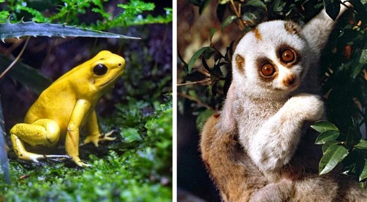 10 animali dall'aspetto adorabile che di fatto potrebbero ucciderti