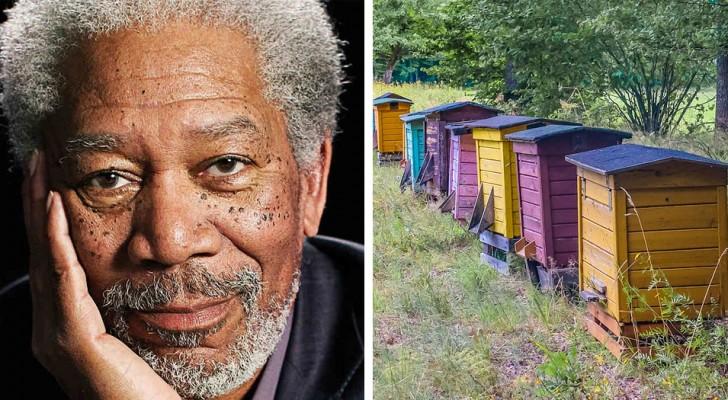 Morgan Freeman hat auf seiner Ranch einen Zufluchtsort für Bienen geschaffen, um ihr Sterben zu verhindern