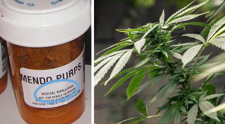 Cannabis: Die WHO erkennt endlich seine therapeutischen Eigenschaften an