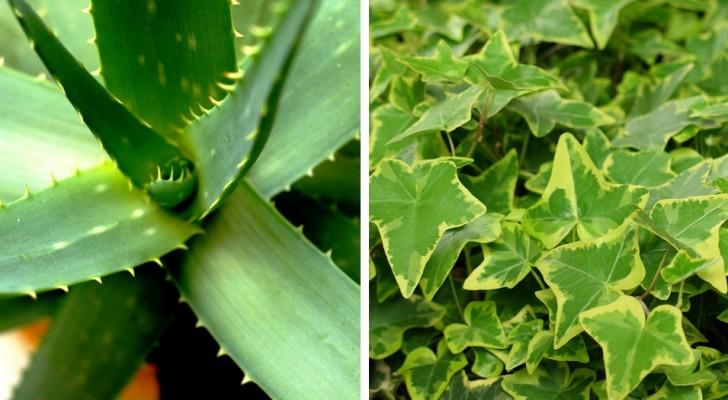 Hier zijn de 7 planten die je in huis moet hebben om de gifstoffen te verwijderen en zuurstof naar binnen te halen