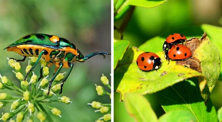 Over de hele wereld verdwijnen insecten in recordtempo: de gevolgen voor het menselijk leven zullen rampzalig zijn
