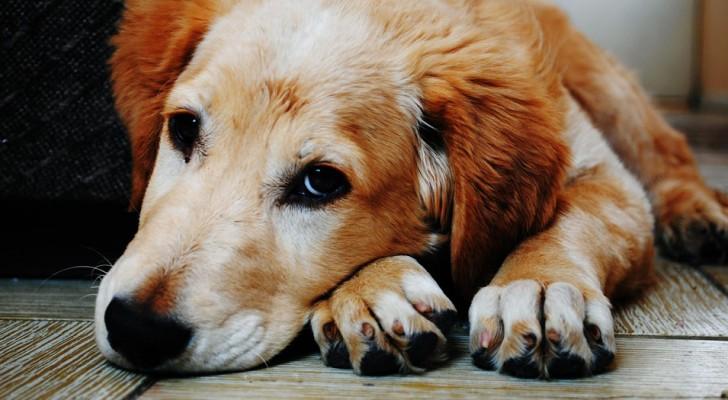 Einen Hund aufzunehmen ist das beste Geschenk, das wir uns selbst und unserer Familie machen können
