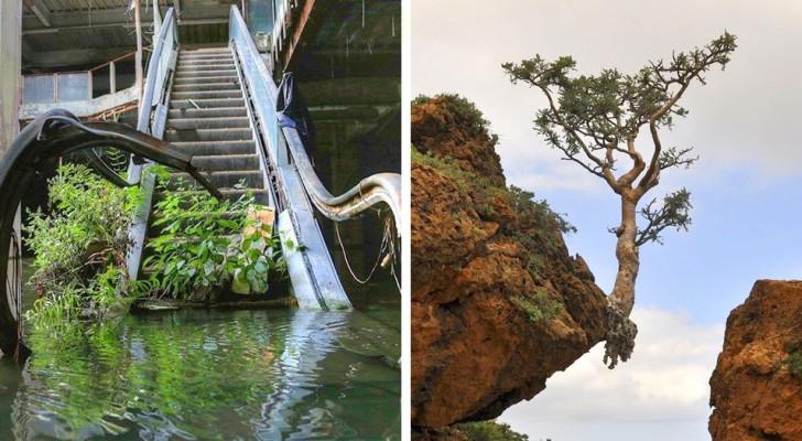 La rivincita della natura:16 immagini che ci mostrano la sua tenacia inarrestabile