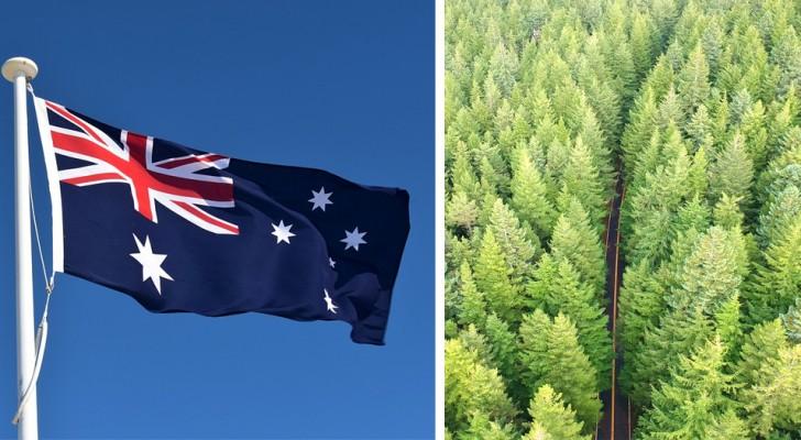 Australië plant een miljard nieuwe bomen om de klimaatverandering te stoppen