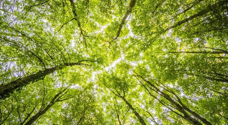 Die Erde braucht 1 Billion Bäume, um die Luft von Kohlendioxid zu befreien