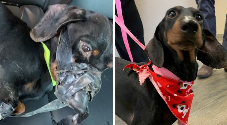 A dog is tied up and thrown into a ditch, but the culprit makes a mistake that will cost him dearly