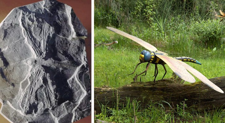 Meganeura: la temibile libellula preistorica con un'apertura alare di 75 centimetri