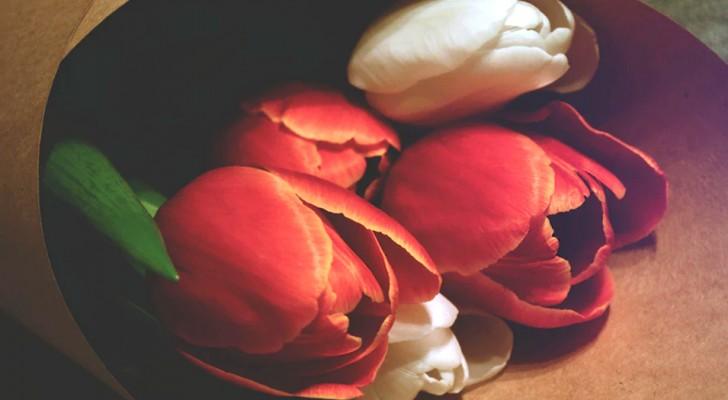 A romântica lenda do nascimento das tulipas, a flor da primavera e do amor