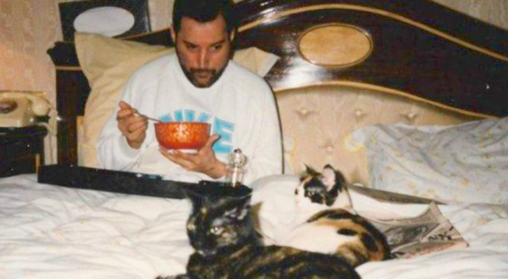 18 Fotos von Freddie Mercury mit seinen Katzen, die er liebte, als wären sie seine Kinder