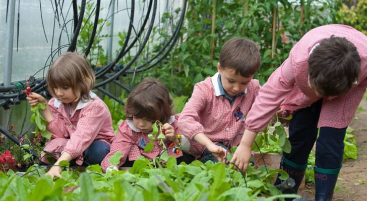 Sempre più scuole stanno creando un proprio orto, e i risultati superano ogni aspettativa