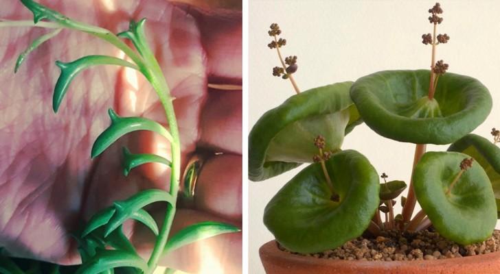 9 ongelooflijke kamerplanten waarvan je waarschijnlijk het bestaan niet kende