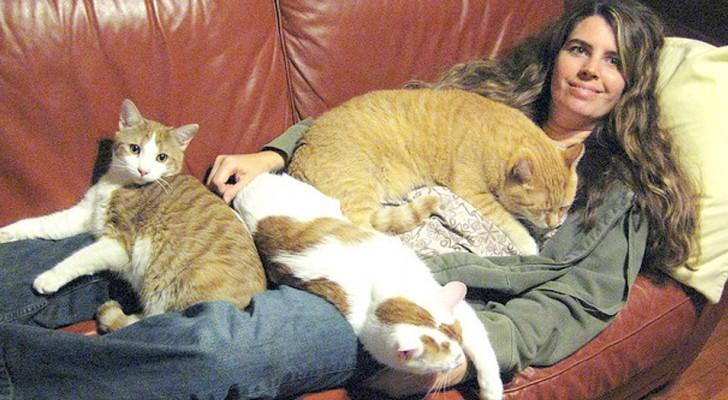 Si vous pensez que les chats sont asociaux, c'est probablement vous qui l'êtes : c'est la science qui le dit