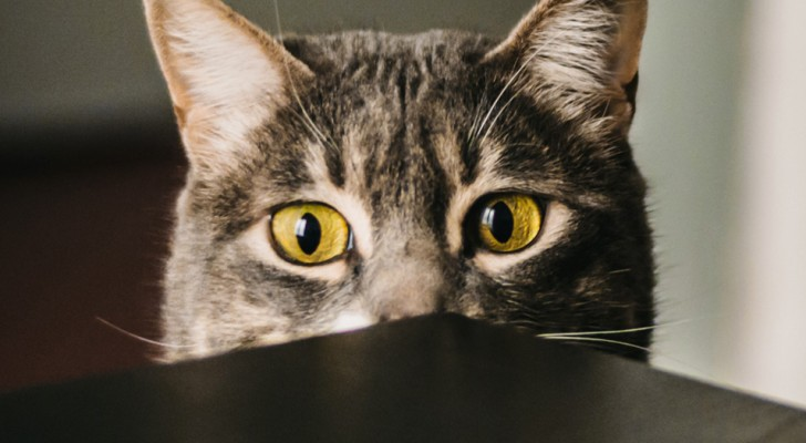 Il tuo gatto è nevrotico? Secondo la scienza rispecchia semplicemente la tua personalità