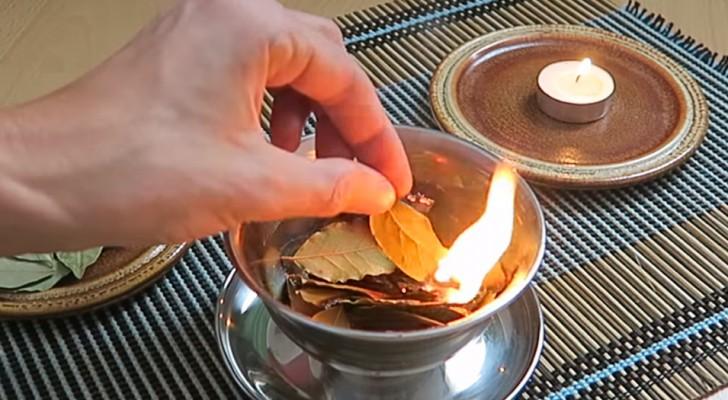 7 coisas que acontecem quando você queima uma folha de louro em casa