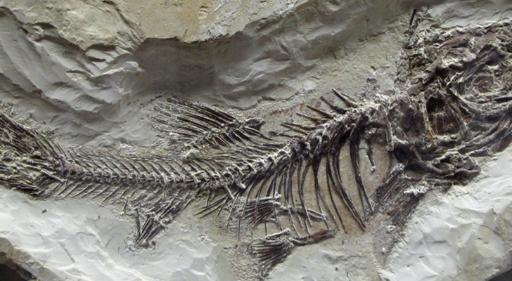 Nous savons enfin ce qui a exterminé les organismes marins dans la pire extinction de l'histoire