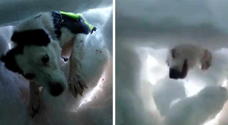Een man die gevangen zit in de sneeuw filmt het moment waarop hij wordt gered door een reddingshond