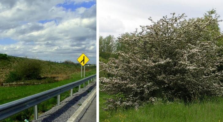 Le curieux épisode de l'autoroute irlandaise qui a été détournée pour sauver un arbre sacré pour les fées