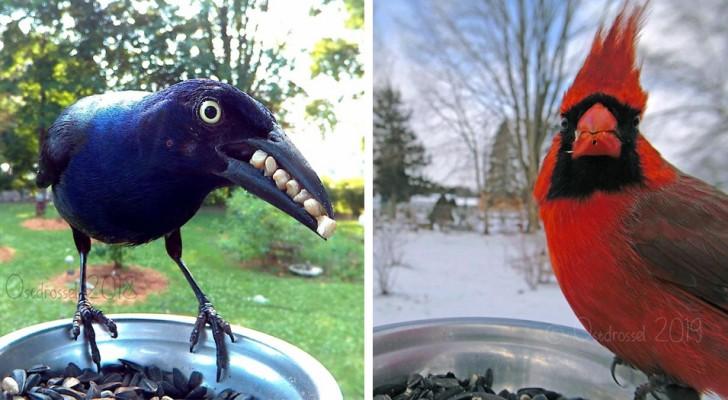 Mette una fotocamera in giardino: quando scarica la scheda scopre degli scatti impressionanti