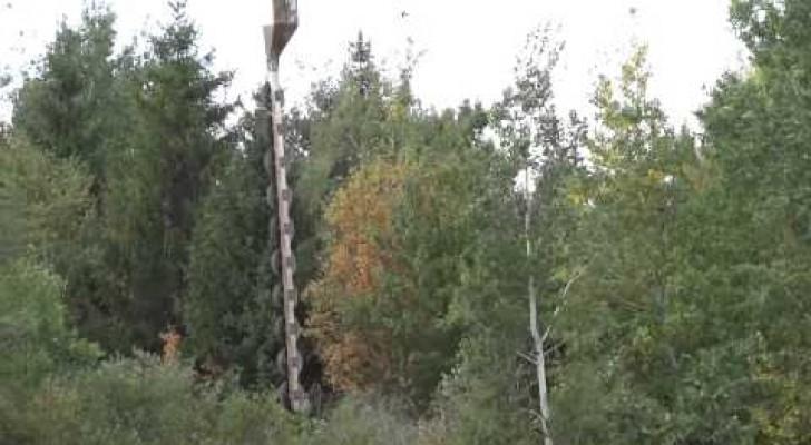 Bäume so zu schneiden ist wirklich sensationell!