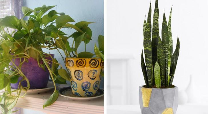 Avere una qualsiasi di queste 6 piante in camera da letto ti farà dormire meglio